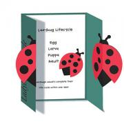 Ladybug Life Cycle Gatefold Card